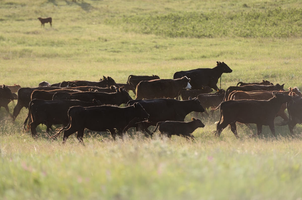 ND: Diversification as a Key to Success at the Black Leg Ranch