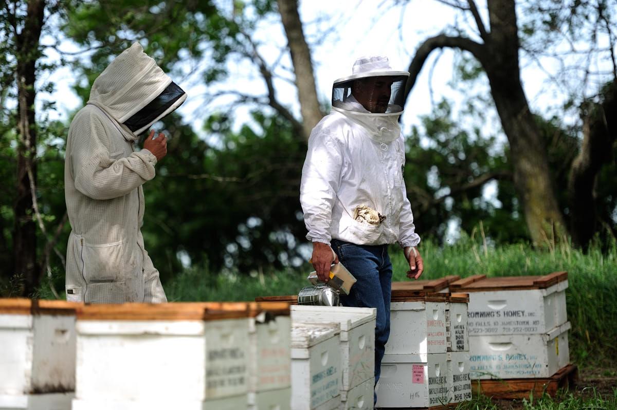 ND: Beekeeping in North Dakota