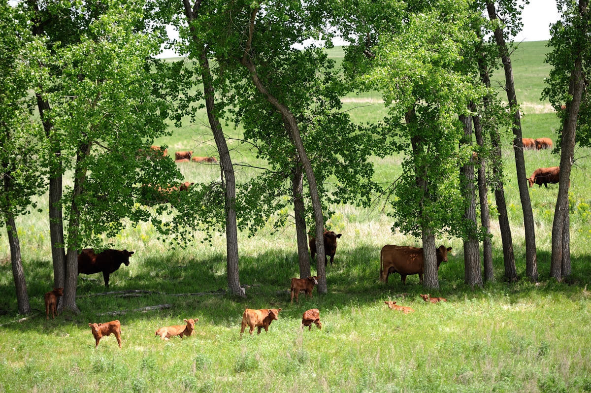 ND: Increasing Soil Health for More Productive Ranching
