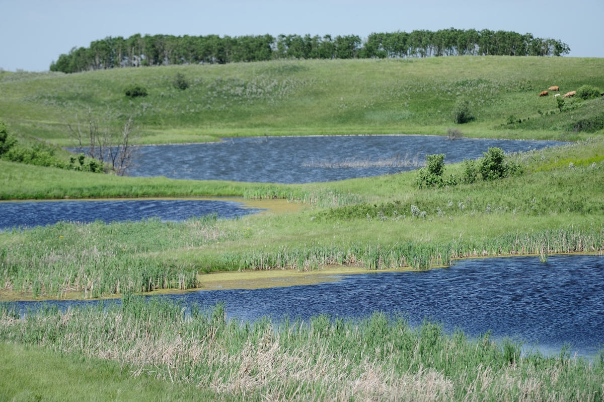 ND: Oil and Gas Industry Brine Spill Remediation