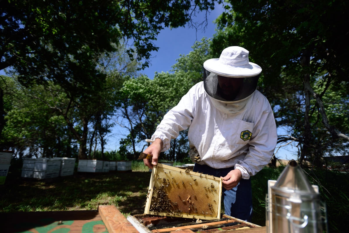 ND: Beekeeping in North Dakota